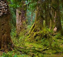 Hoh Rain Forest by RavenFalls