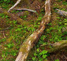 Rainforest Floor by RavenFalls
