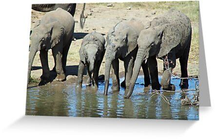 Petes pond elephants drinking in rythm by jozi1