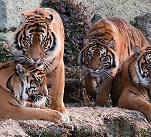 A mother and her Cubs by Mark  Attwooll