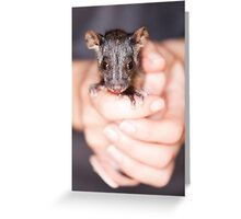 """Aloe"" Ringtail Possum Greeting Card"
