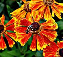Bee by Vanesa Bonilla