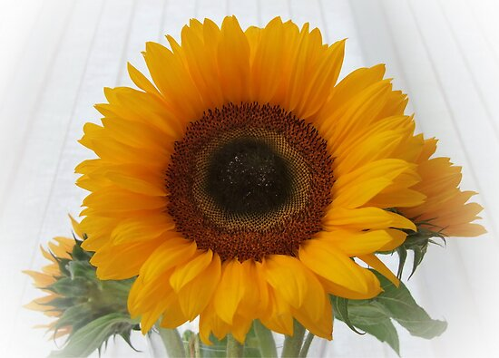 Sunflower by AnnDixon