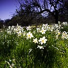Spring at Cotehele by Country  Pursuits