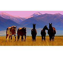 Loneliest Road In America Wild Horse Herd  Photographic Print
