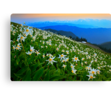 Flower Avalanche Canvas Print