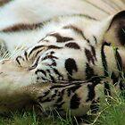 Sleeping Tiger 2 by Steve Unwin