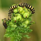 Eat your greens! by Steve Unwin