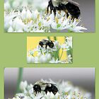 Bumble Bee Collage by DottieDees