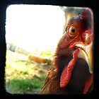 The Eye of the Beholder - Chicken Portrait by redashton