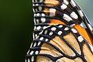 Monarch Wings by AuntDot