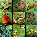 Birds, flowers, butterflies and the things in my backyard by Jorge Elias