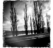 Canberra trees Photographic Print
