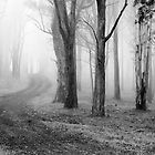 Forest Fog by Louise Wolfers