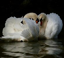 Love Story by JanSmithPics