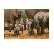 Baby African Elephants Art Print
