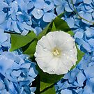 What's this flower on a blue bed by julie08