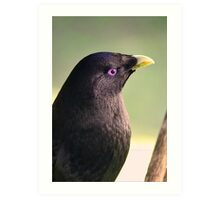 Male Bower Bird Art Print