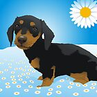 Daisy dachshund by Matt Mawson