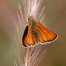 Butterfly Resting by Paul Morley