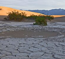 Death Valley Detail by Rick Gustafson