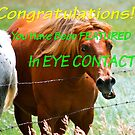 Eye Contact Banner by Carol Clifford