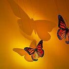 Montréal - Butterflies dancing. by Jean-Luc Rollier