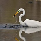 egret by JimGuy