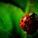 little ladybug by NEmens