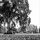 Tree in a field bw by Theodore Black