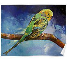 Wild Parakeet Poster