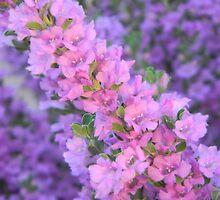 Purple Desert Sage by Leyla Hur