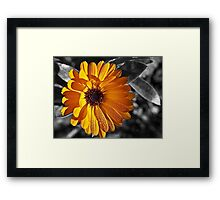 feeling the warmth Framed Print