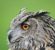 Eagle Owl Eyes by MarathonMan