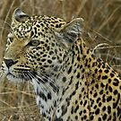 Majestic leopard by jozi1
