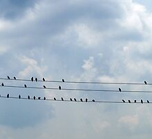 Birds on the Wire... Making Music by BCallahan