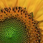 Sunflower Detail by David Kocherhans