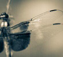 wings by Alexandr Grichenko