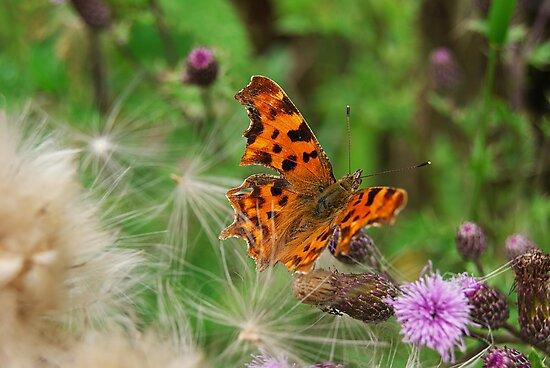 Butterfly by Kasia Jones