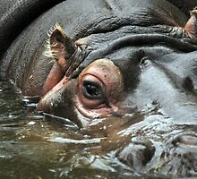 Lady of the Lake - Hippopotamus by Rachel81