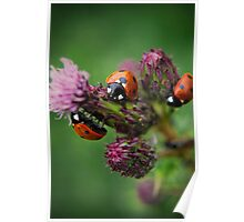3ree Times A Ladybird Poster