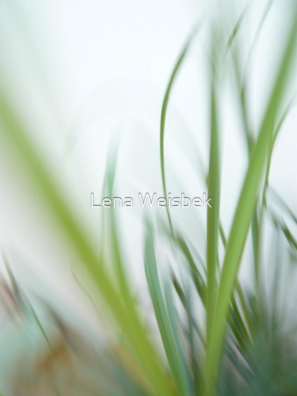 Mild breeze by Lena Weiss