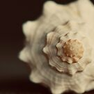 She Sells Sea Shells by ameliakayphotog