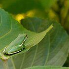 Treefrog Resting by Joe Elliott