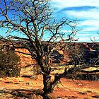 Tree at Canyon de Chelly by Terence Russell