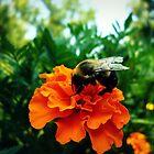 Bee & Marigold by Susan S. Kline