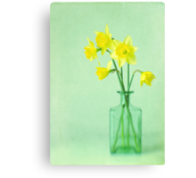 Dreamy Daffodils Canvas Print