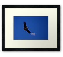 Flight of the  Condor Framed Print