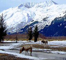 Wildlife Near Portage, Alaska by John Carpenter