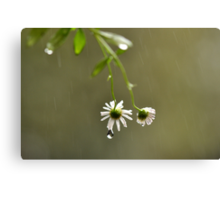 I'll do my crying in the rain ~ Canvas Print